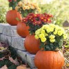 Beautiful Creativity: Fall Flowers Planted in a Pumpkin