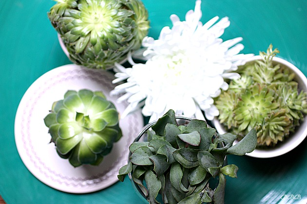Decorating throughout the home with small succulents