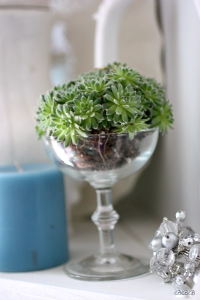 Use wine glasses for succulents
