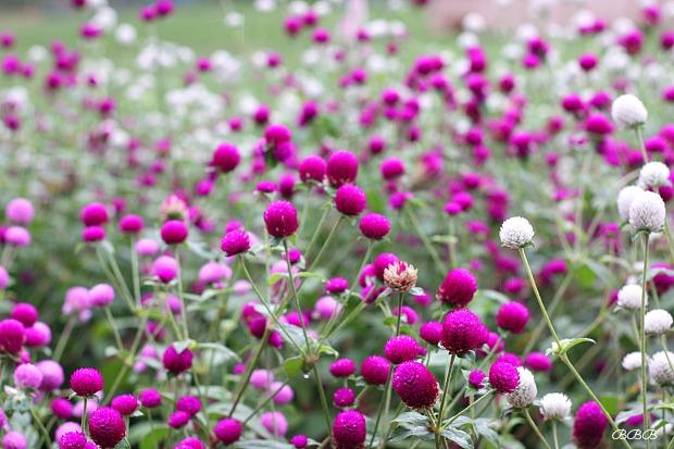 Gardens at Monticello