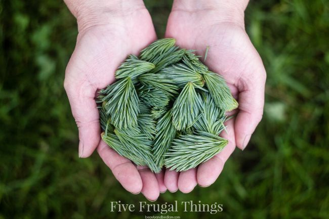 Love this day to day look. Five Frugal things I did today. It's a lifestyle